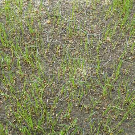 Græsarmering Netbyggemarked med græs